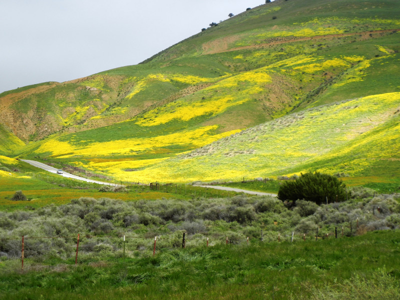 Yellow Slopes